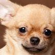 Собака «угнала» машину хозяйки и едва не спровоцировала ДТП