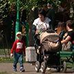 В Беларуси появится электронная система учёта многодетных семей