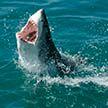 Акула атаковала на пляже китайских туристов