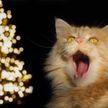 Кот и новогодняя елка: 20 фото, которые заставят вас улыбнуться!