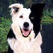 Собака показала мастер-класс игры в теннис и покорила Сеть (ВИДЕО)