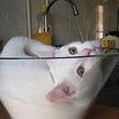 Еще 15 доказательств того, что коты – это жидкость. И только посмотрите на пятое чудо!