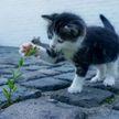 Котенок залез на собаку и хотел поиграть, но она была невозмутима. Смешное видео покорило всех