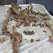 Скелет, найденный в заброшенном доме в Смолевичском районе, «заговорил». Журналистское расследование «Тревожной кнопки»