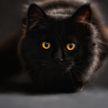 Кошка потратила одну из девяти жизней, чтобы спастись из горящего здания (ВИДЕО)