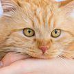 «Разрядился»: кот хотел устроить скандал, но передумал. Это очень смешное зрелище!