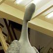 Скульптура «Ангел» появится в Минске в честь белорусских врачей