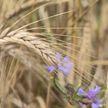 Выдержит ли страна еще одно засушливое лето? Как изменили посевную кампанию в Беларуси