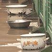 Волонтёры обеспокоены содержанием животных в «Фауне города»: на улице мороз, а в вольерах нет отопления