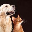 10 минут общения с кошками и собаками снижают уровень стресса