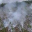Загорелся торфяник в Витебском районе: на тушение пожара были направлены 7 спецмашин и более 30 спасателей