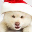 Собаки тоже любят Санту! Милый щенок впечатлён встречей с  новогодним волшебником