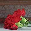 Двойное убийство в Бобруйске: подробности