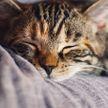 Кто в доме хозяин: кошка забрала лежанку у собаки