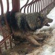 Минские спасатели освободили застрявшую в заборе собаку