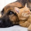 Собака одним движением лапы отбросила шипящего кота и рассмешила весь интернет! (ВИДЕО)