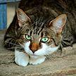 Названы симптомы COVID-19 у домашних животных