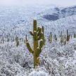 Аномальные холода пришли в Мексику – есть пострадавшие