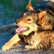 Что делать, чтобы спасти кошек и собак от теплового удара, и какая первая помощь при перегреве?