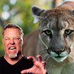 Metallica спасла девушку из Канады от пумы
