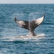 Два редких кита погибли из-за маневров эсминца у берегов США