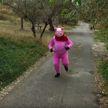 Новогодний трэш из Одессы: местный зоопарк презентовал клип о том, как свинья свергает с трона собаку