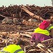 Пляжи Лазурного берега усеяны мусором и стволами деревьев после шторма