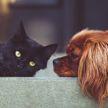 Украинка бросила на произвол судьбы 40 котов и одну собаку в съемной квартире