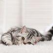 Кошка гордится своими котятами? Посмотрите на ее выражение «лица» – сразу все поймете! (ВИДЕО)