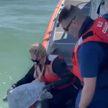 В США спасенных от морозов черепах выпускают обратно в океан