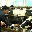 Белорусский опыт в производстве молока и мяса станет основой крупного проекта в сельском хозяйстве