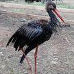 Спасти Бусю. Грустная история птицы, приносящей счастье