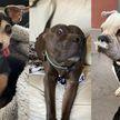 10 фотографий собак, которые поднимут настроение любому. Как вам милашка под №2?