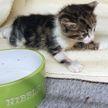 В Великобритании ветеринары спасли умирающего котенка, перелив ему кровь собаки