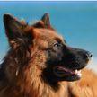 Собака спасла хозяина от пылесоса. Вот что она сделала! Посмотрите, какая умная – удивительно! (ВИДЕО)