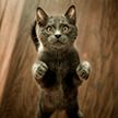 Смущенный кот решил подраться со своим отражением в зеркале и рассмешил соцсети