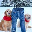 «Ледяные штаны»: из-за аномальных морозов в США набирает популярность необычный флешмоб