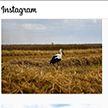 Конкурс «Моя Беларусь»: за лучшее фото – ценный приз от ОНТ