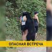 Медведь обнюхал туристку в Мексике и сделал с ней селфи (ВИДЕО)