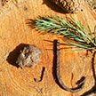 Артефакты I-V веков обнаружили в ходе раскопок под Верхнедвинском