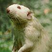Уличный кот напал на «крысу-ниндзя» и не смог одолеть противника (ВИДЕО)