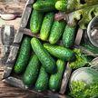 Овощ, который нужно есть чаще в период эпидемии
