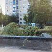 Сломанная ветка дерева придавила ребенка в Мозыре