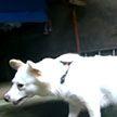 Жительница Словакии мстила соседям за лай собаки с помощью оперы Верди