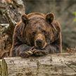 Принца Лихтенштейна уличили в убийстве самого большого медведя Европы