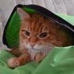 Слишком толстый кот был снят с рейса из-за перевеса