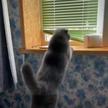 Неловкие попытки кота запрыгнуть на подоконник взорвали Сеть. Вы будете смеяться до слез!