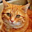 «Смотрю и плачу»: встреча ребенка с кошкой, пропавшей полгода назад, растрогала сеть