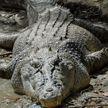 Новый вид древних родственников крокодилов нашли в Китае