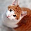 Реакция кошки на ноги хозяина заставила всех хохотать!  Посмотрите, это уморительно!(ВИДЕО)